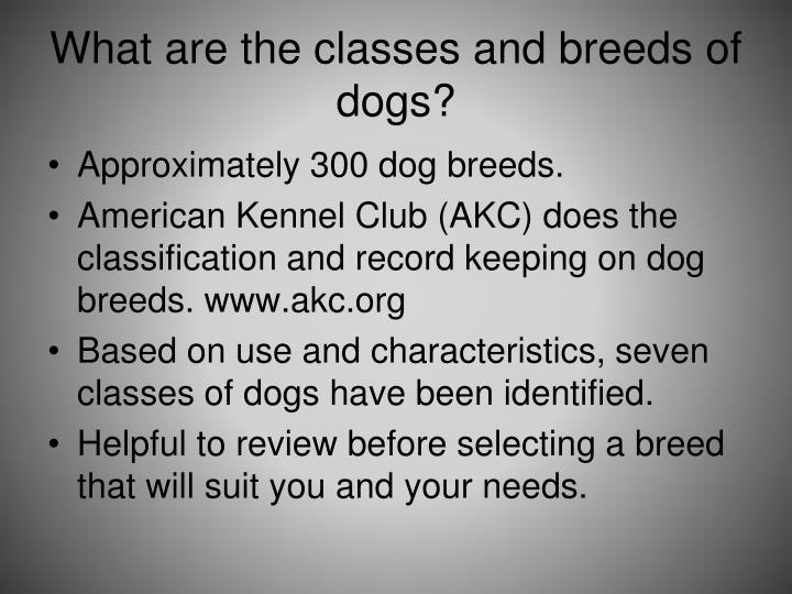 What are the classes and breeds of dogs?