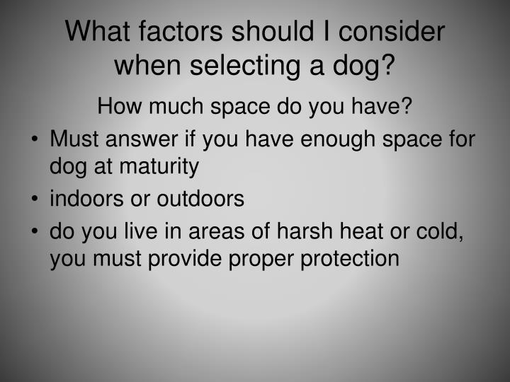 What factors should I consider when selecting a dog?