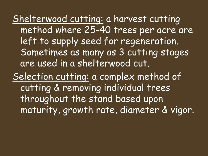 Shelterwood cutting: