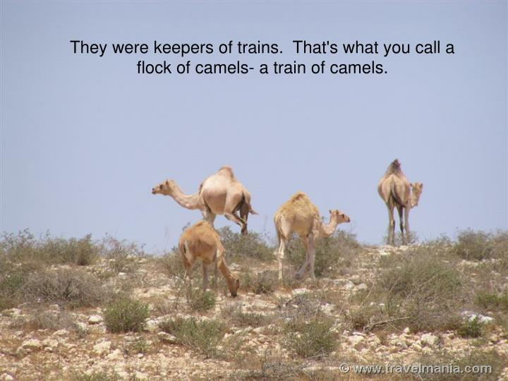 They were keepers of trains.  That's what you call a flock of camels- a train of camels.