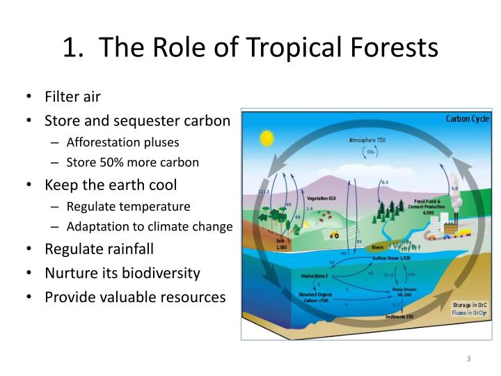 1 the role of tropical forests