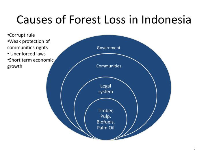 Causes of Forest Loss in Indonesia