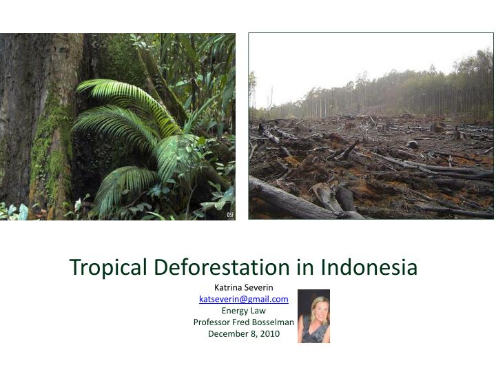 Tropical Deforestation in Indonesia