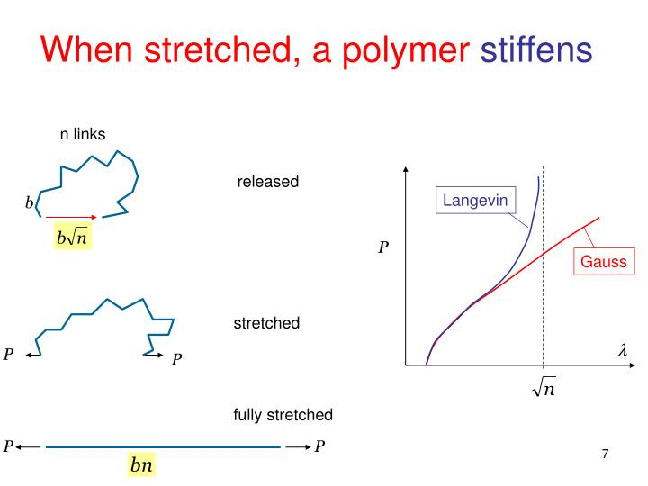 When stretched, a polymer