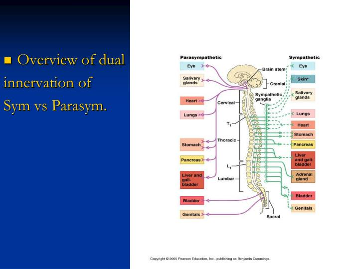Overview of dual