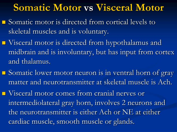 Somatic motor vs visceral motor