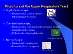 microflora of the upper respiratory tract