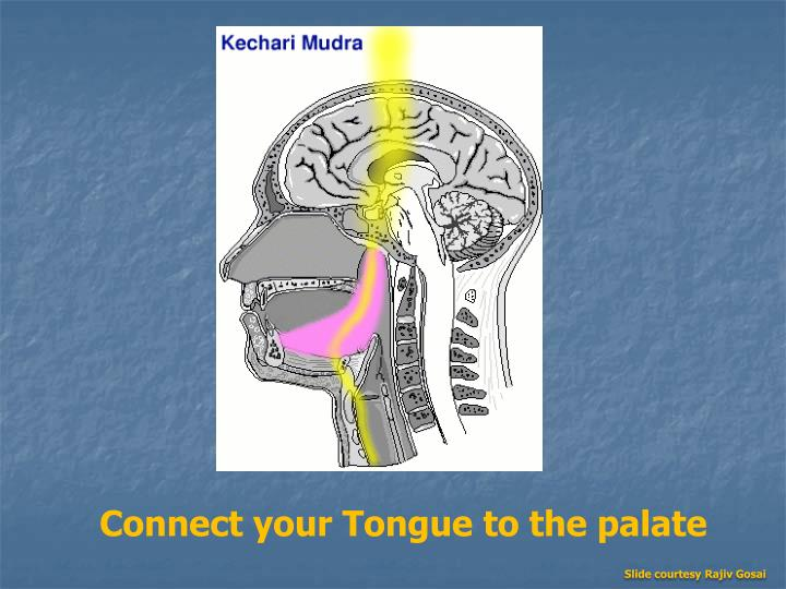 Connect your Tongue to the palate