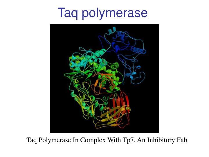 Taq polymerase