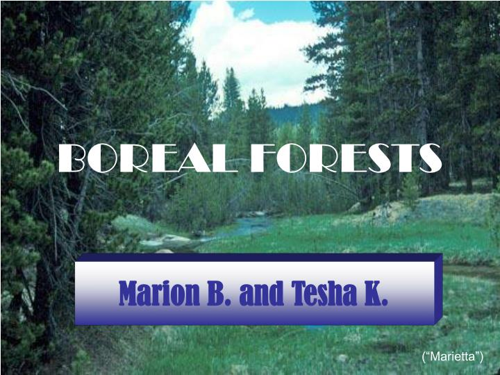 boreal forests n.