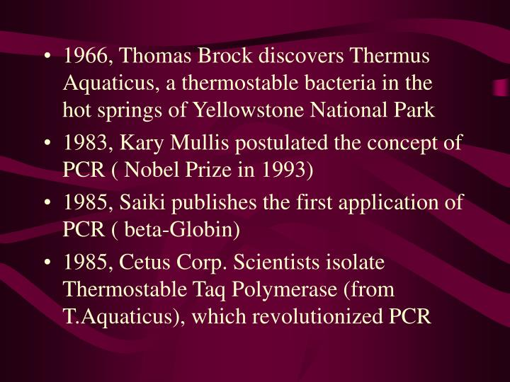 1966, Thomas Brock discovers Thermus Aquaticus, a thermostable bacteria in the hot springs of Yellow...