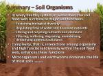 summary soil organisms