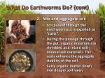 what do earthworms do cont