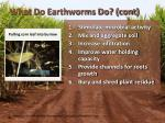what do earthworms do cont2