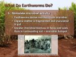 what do earthworms do