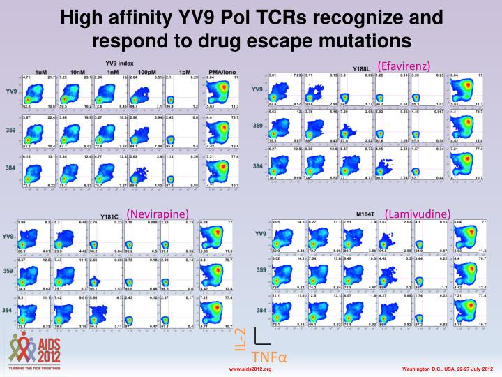 High affinity yv9 pol tcrs recognize and respond to drug escape mutations