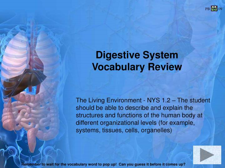 digestive system vocabulary review n.