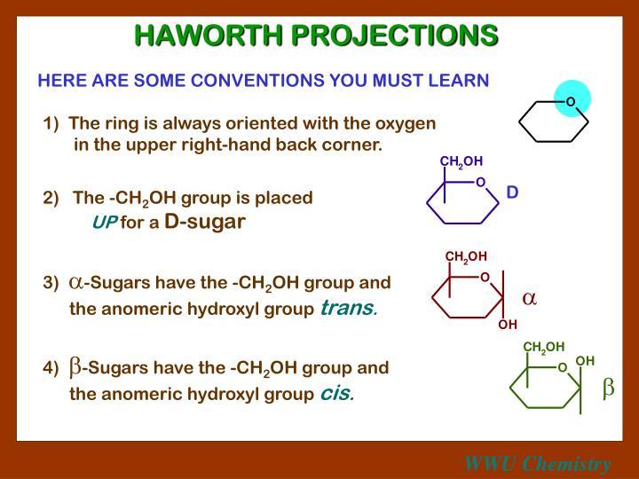HAWORTH PROJECTIONS