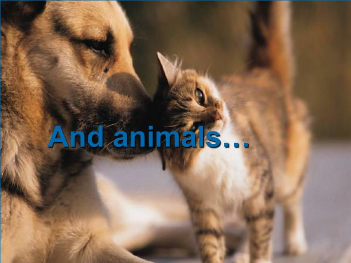 And animals…