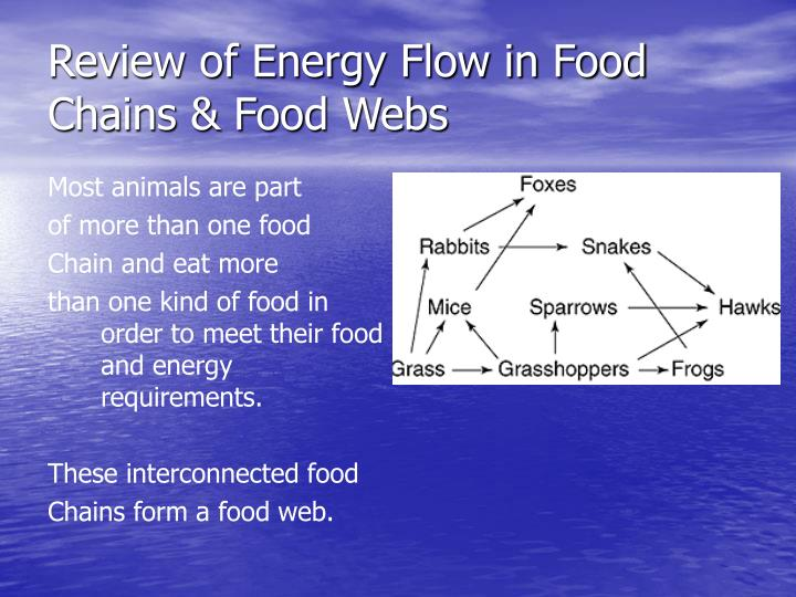 Review of Energy Flow in Food Chains & Food Webs