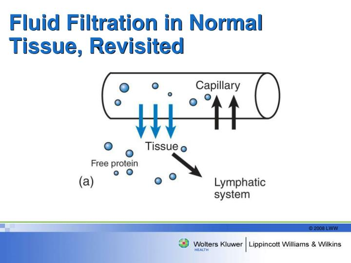 Fluid Filtration in Normal Tissue, Revisited