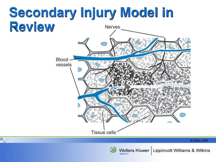 Secondary Injury Model in