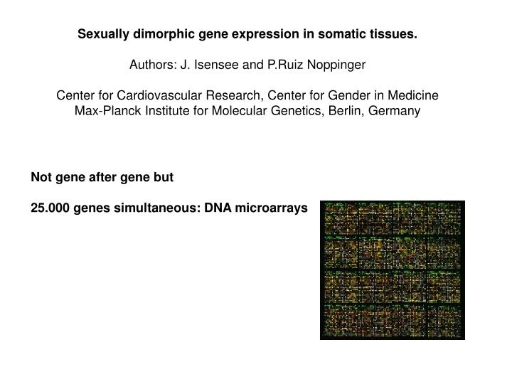 Sexually dimorphic gene expression in somatic tissues.
