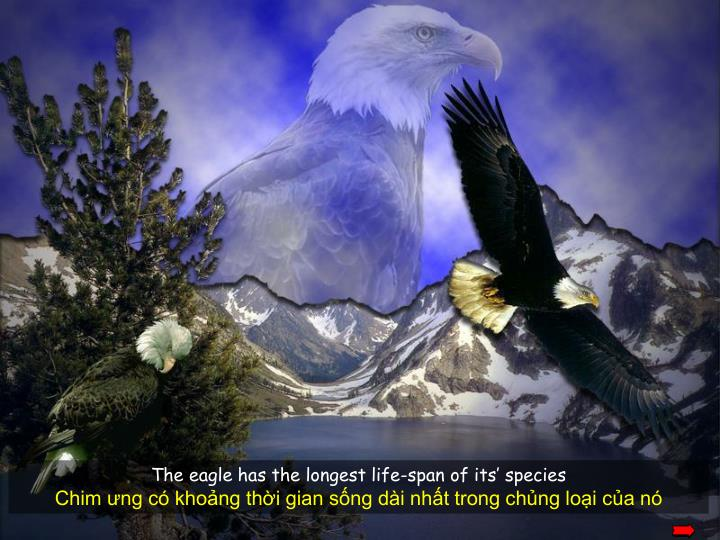 The eagle has the longest life-span of its' species