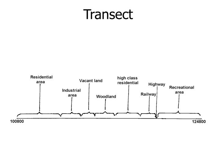 Transect
