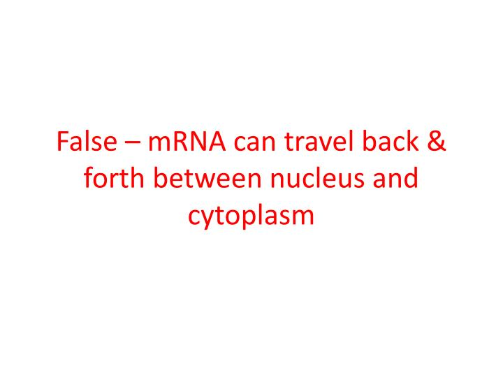 False – mRNA can travel back & forth between nucleus and cytoplasm