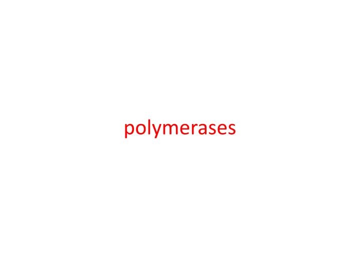 polymerases