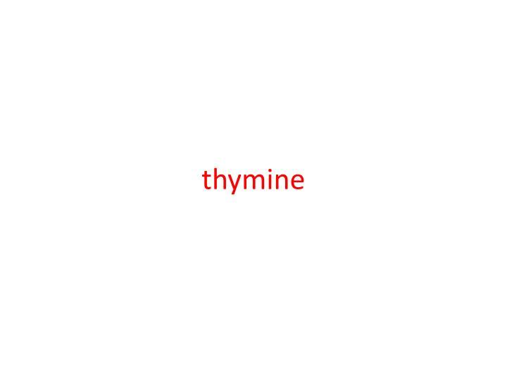 thymine