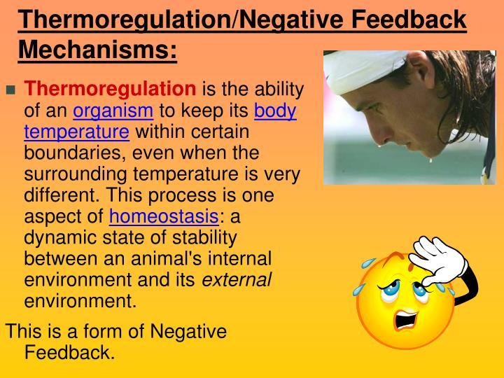 Thermoregulation/Negative Feedback Mechanisms: