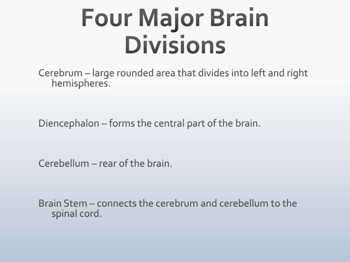 Four Major Brain Divisions