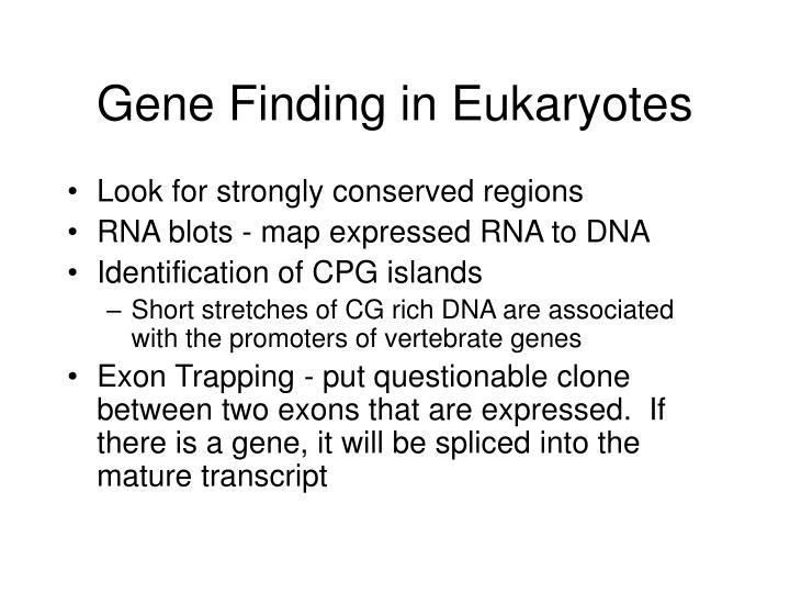 Gene Finding in Eukaryotes