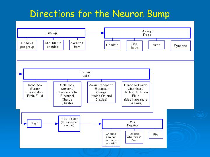 Directions for the Neuron Bump