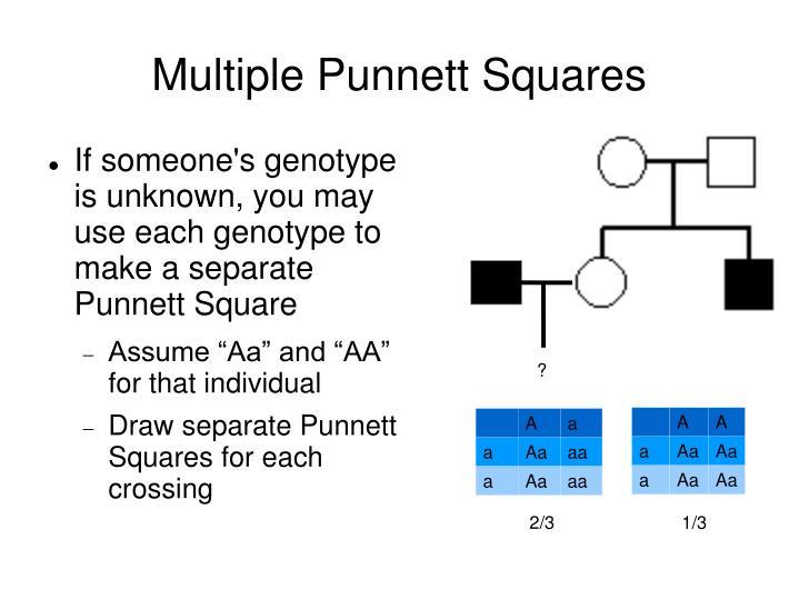 Multiple Punnett Squares