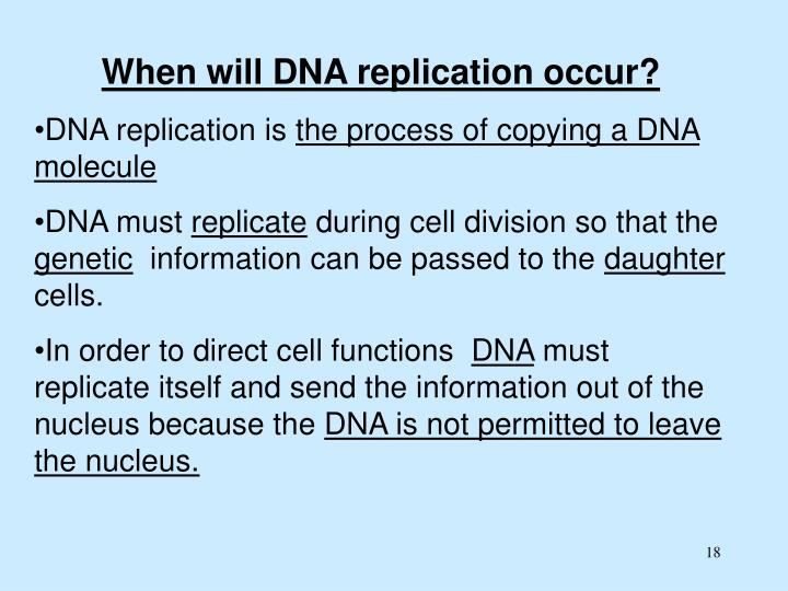 When will DNA replication occur?
