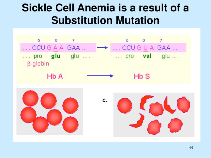Sickle Cell Anemia is a result of a Substitution Mutation