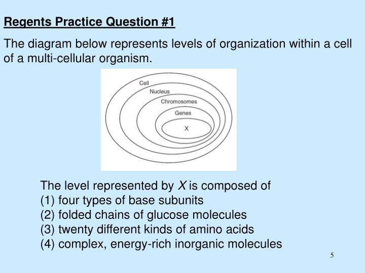 Regents Practice Question #1