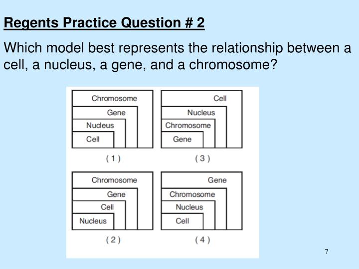 Regents Practice Question # 2