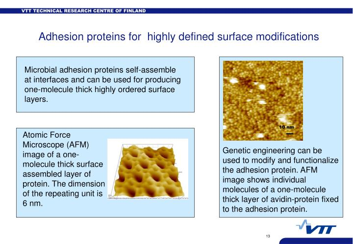 Microbial adhesion proteins self-assemble  at interfaces and can be used for producing one-molecule thick highly ordered surface layers.