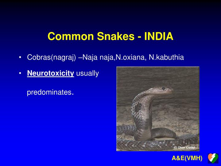 Common snakes india