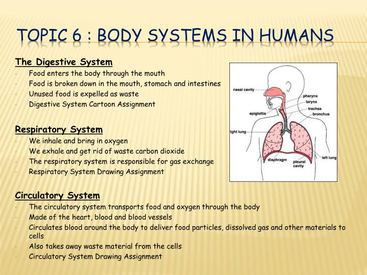 topic 6 body systems in humans n.