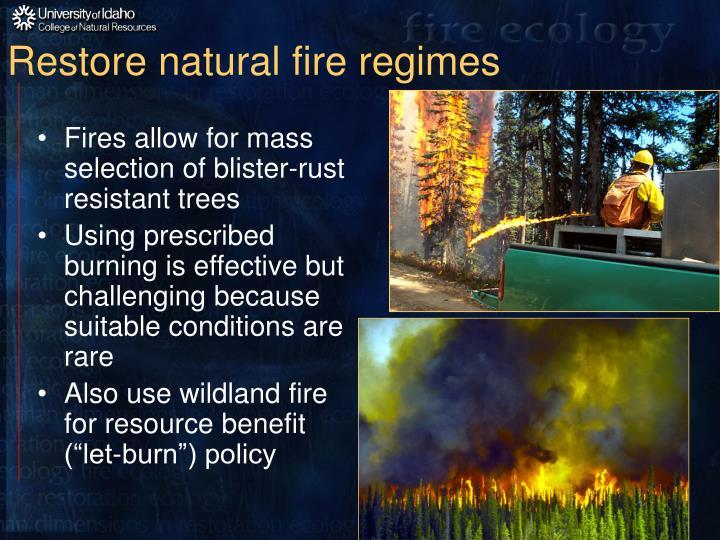 Restore natural fire regimes