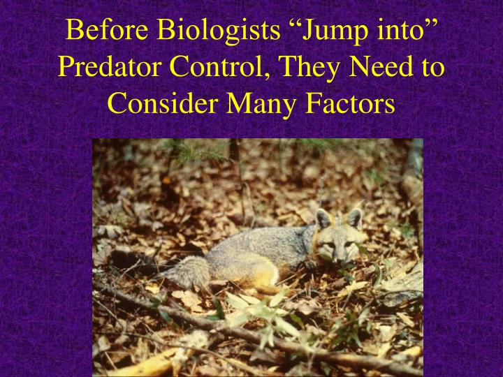 "Before Biologists ""Jump into"" Predator Control, They Need to Consider Many Factors"