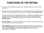 functions of the retina