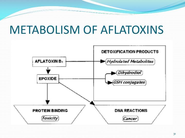 METABOLISM OF AFLATOXINS