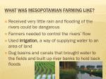what was mesopotamian farming like