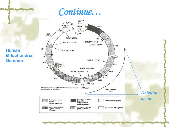 Human Mitochondrial Genome